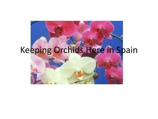 Keeping Orchids Here in Spain