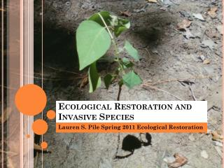 Ecological Restoration and Invasive Species