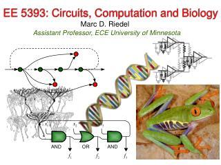 EE 5393: Circuits, Computation and Biology