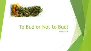To Bud or Not to Bud?