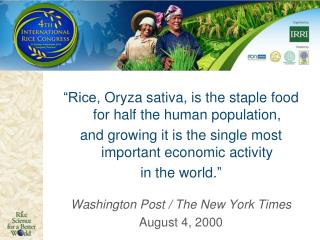 """Rice,  Oryza  sativa, is the staple food for half the human population,  and  growing it is the single most important"