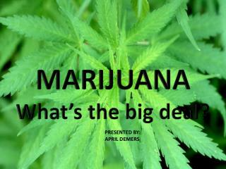 MARIJUANA  What�s the big deal?
