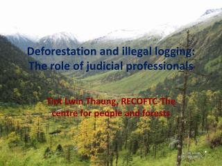 Deforestation and illegal logging: The role of judicial professionals