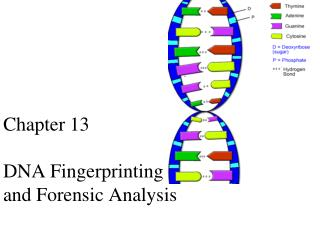 Chapter  13 DNA Fingerprinting  and  Forensic Analysis