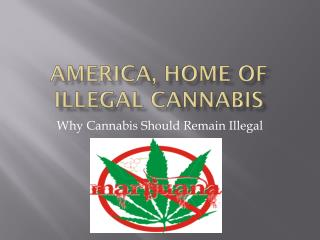 America, Home of Illegal Cannabis