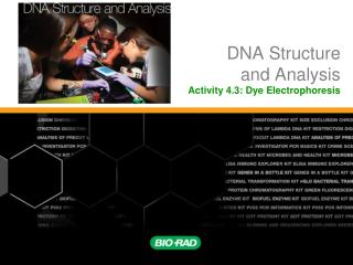DNA Structure and Analysis