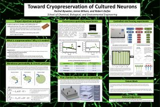 Toward Cryopreservation of Cultured Neurons