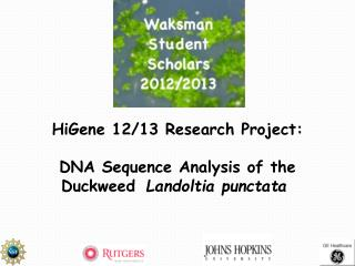 HiGene 12/13 Research Project: DNA Sequence Analysis of the  Duckweed  Landoltia punctata