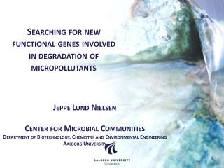 Jeppe Lund Nielsen Center  for  Microbial  Communities Department of Biotechnology,  Chemistry  and Environmental  Engi