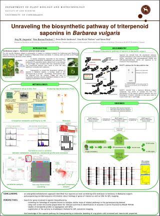 Unraveling the biosynthetic pathway of triterpenoid saponins in  Barbarea vulgaris