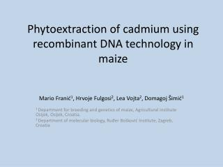Phytoextraction of cadmium using recombinant DNA technology in maize
