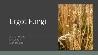Ergot Fungi
