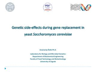 Genetic side - effects during gene replacement in yeast  Saccharomyces cerevisiae