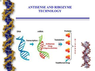 ANTISENSE AND RIBOZYME TECHNOLOGY