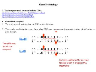 GeneTechnolog y I.  Techniques used to manipulate DNA  http://www.youtube.com/watch?v=yc-s-WojU5Y&feature=related http:
