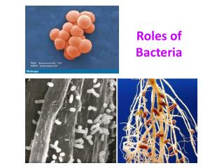 Roles of Bacteria