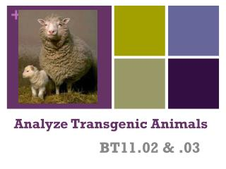 Analyze Transgenic Animals