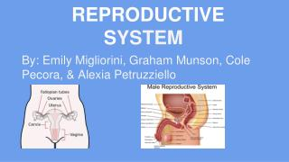 REPRODUCTIVE S YSTEM