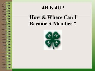 4H is 4U ! How & Where Can I  Become A Member ?