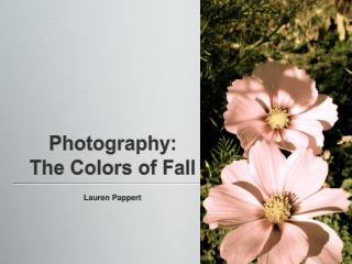 Photography: The Colors of Fall