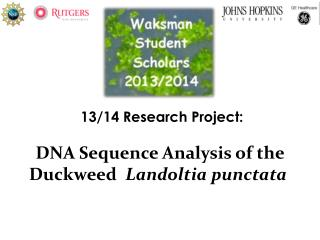 1 3 /14  Research Project: DNA Sequence Analysis of the  Duckweed   Landoltia punctata