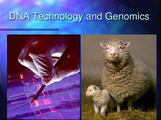 DNA Technology and Genomics