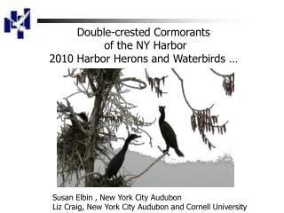 Double-crested Cormorants  of the NY Harbor 2010 Harbor Herons and  Waterbirds  …