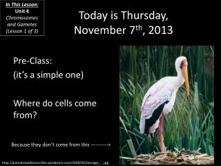 Today is  Thursday, November 7 th ,  2013