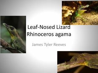 Leaf-Nosed Lizard Rhinoceros agama