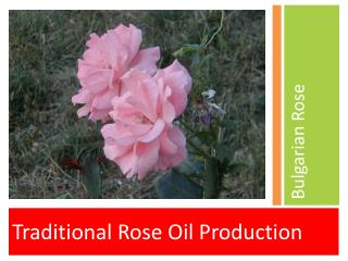 Traditional Rose Oil Production
