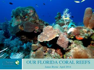 OUR FLORIDA CORAL REEFS