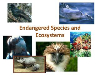 Endangered Species and Ecosystems