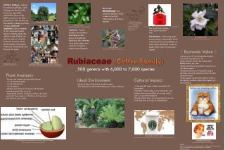 Rubiaceae (Coffee Family)