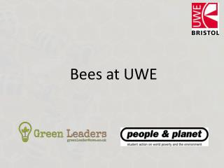 Bees at UWE