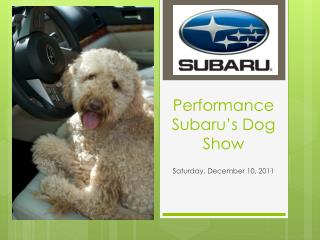 Performance Subaru's Dog Show