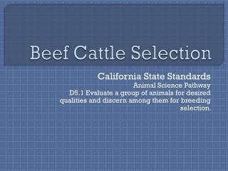 Beef Cattle Selection