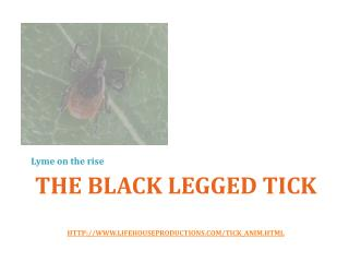 The black legged tick  http://www.lifehouseproductions.com/tick_anim.html