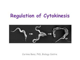 Regulation of  Cytokinesis