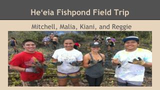 Heʻeia Fishpond Field Trip