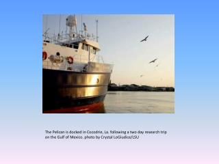 The  Pelican is docked in  Cocodrie , La. following a two day research trip on the Gulf of Mexico. photo by Crystal  Lo