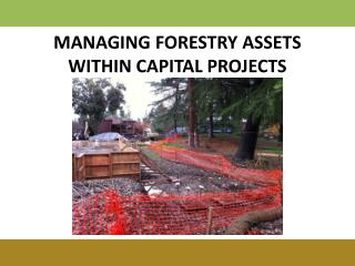 MANAGING FORESTRY ASSETS WITHIN CAPITAL PROJECTS