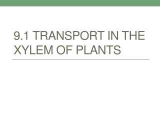 transport structures in vascular plants