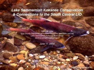 Lake  Sammamish Kokanee  Conservation & Connections to the South Central LIO David St. John King County Department of N