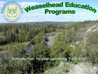 Weaselhead  Education Programs