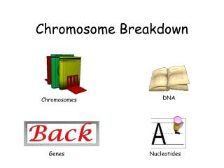 Chromosome Breakdown