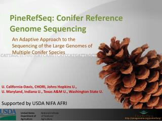 PineRefSeq : Conifer Reference Genome Sequencing