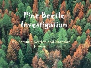 Pine Beetle Investigation
