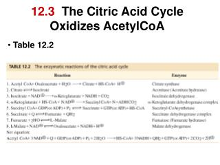 12.3  the citric acid cycle  oxidizes acetylcoa