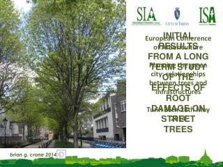 INITIAL RESULTS FROM A LONG TERM STUDY OF THE EFFECTS OF ROOT DAMAGE ON STREET TREES