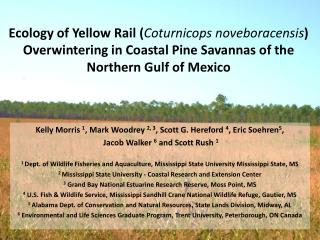 Ecology of Yellow Rail ( Coturnicops noveboracensis ) Overwintering in Coastal Pine Savannas of the Northern Gulf of Me